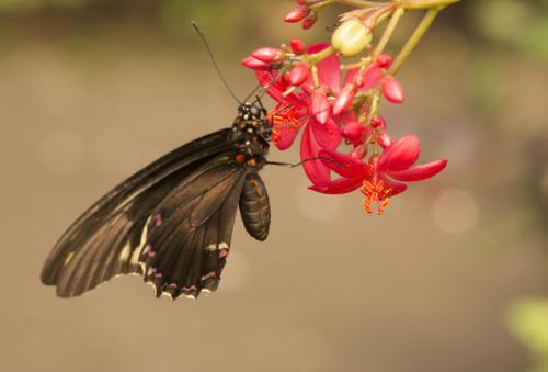 vlinder blijdorp