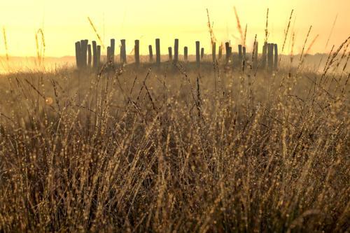 natuur 3 Regte Heide (8)